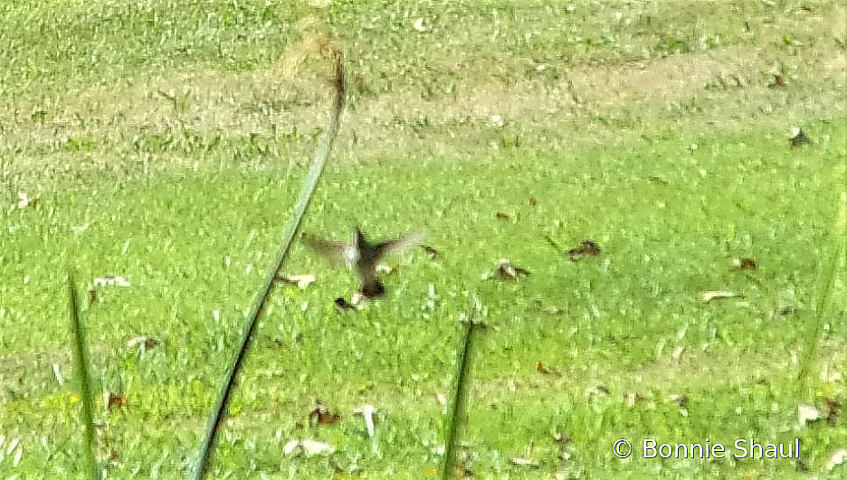 Hovering Next to Lunch