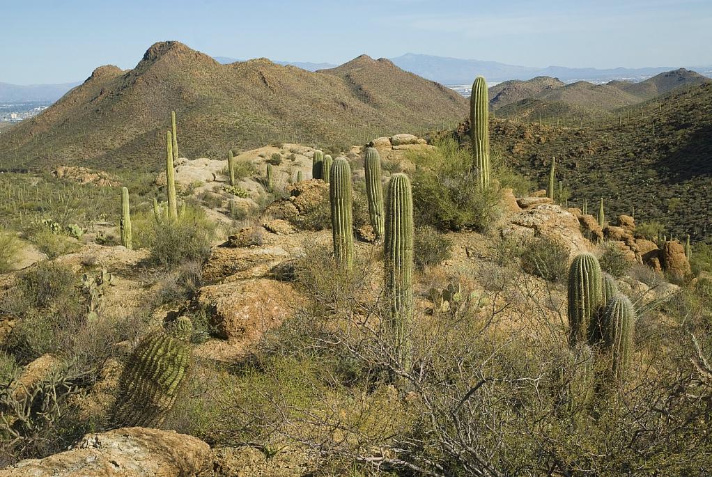 Gates Pass, Tucson, AZ - ID: 15820010 © William S. Briggs