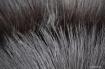 Fan Fur