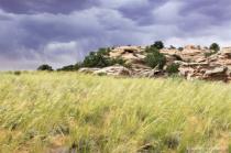 grass land
