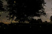 Fireflies 90wmlasoftlrp