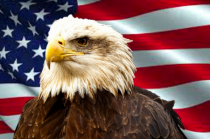 The Bald Eagle, America's Bird