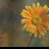 2Hello Sunshine - ID: 15820517 © Carol Eade