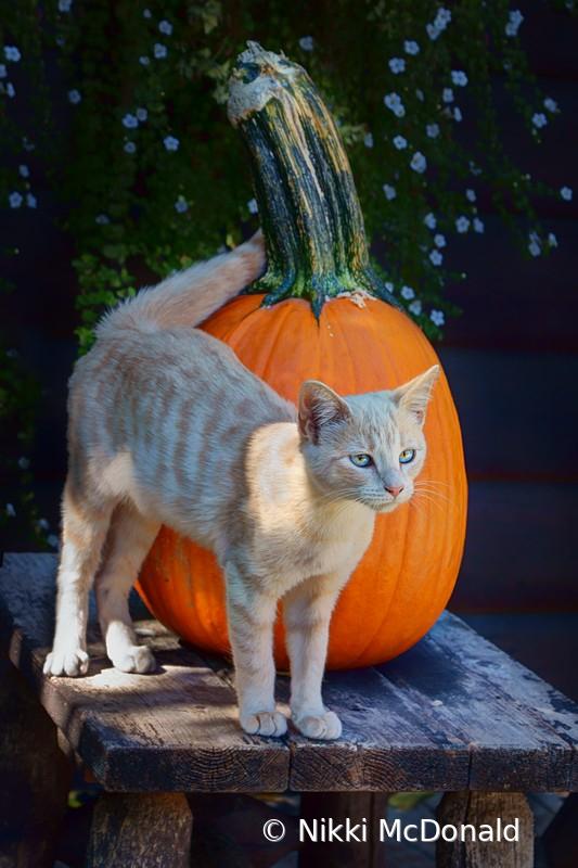 October Kitten #1