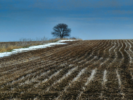 Early Spring in Iowa