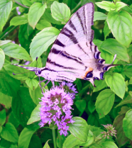 Enjoying the nectar.