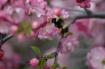 Bee Alone!
