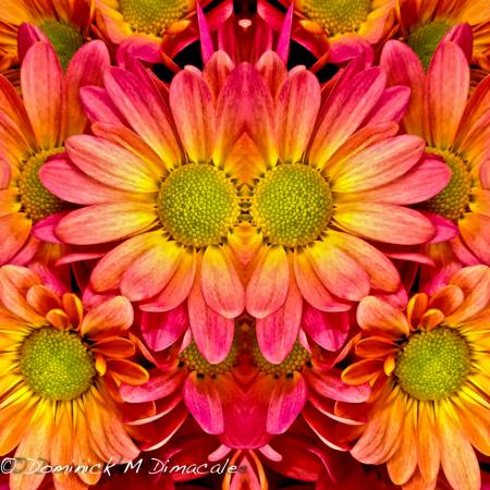 ~ ~ FACE FLOWER ~ ~