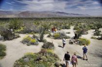 Enjoying the desert Super Bloom