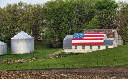 Patriotism And Sheep