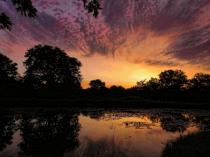 The Pond At Sunrise