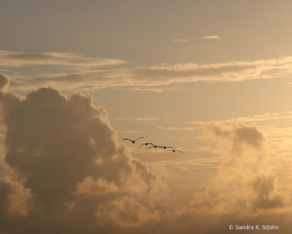 Golden Flight - ID: 15823287 © Sandra K. StJohn