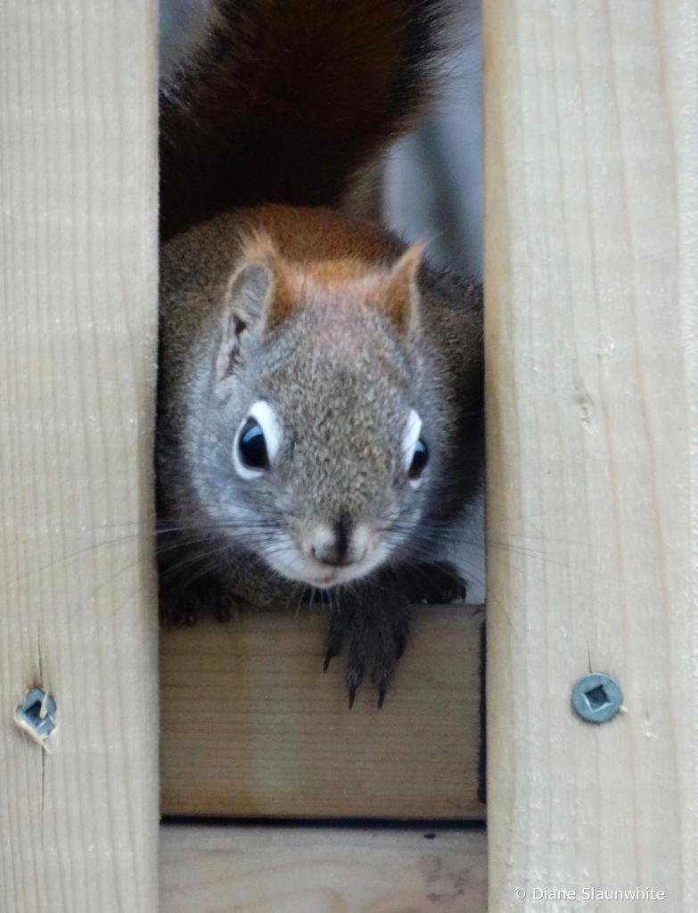 My little buddy - ID: 15823359 © Diane Slaunwhite