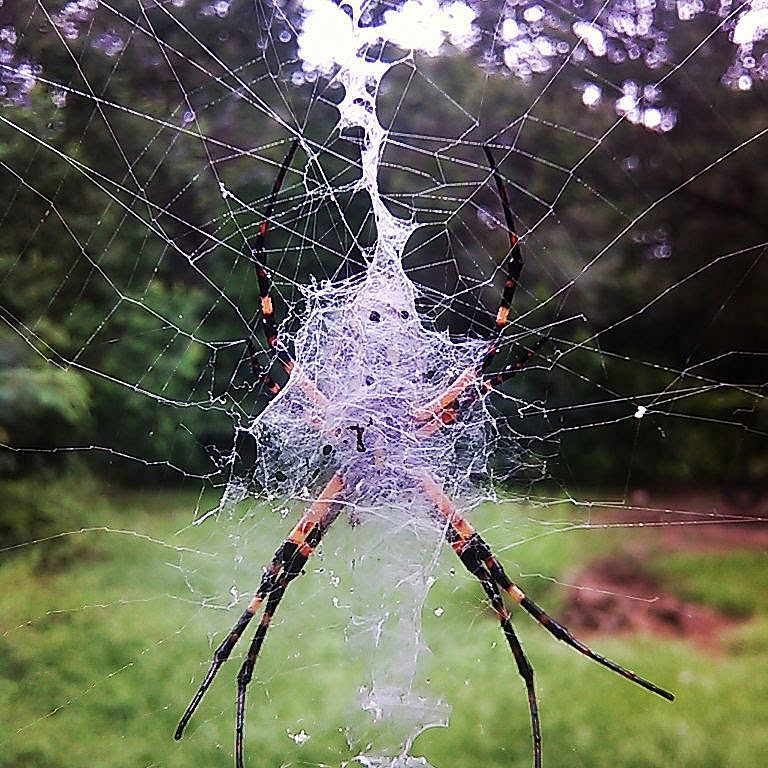 Ghost in the Web - ID: 15823646 © Lynne Hough