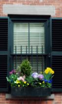 Brimmer Street Window Box