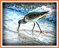 Florida Beach Bird