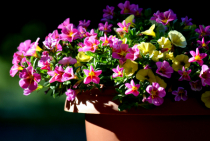 Flowers having first rays of sun