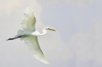 High Key Egret  9690