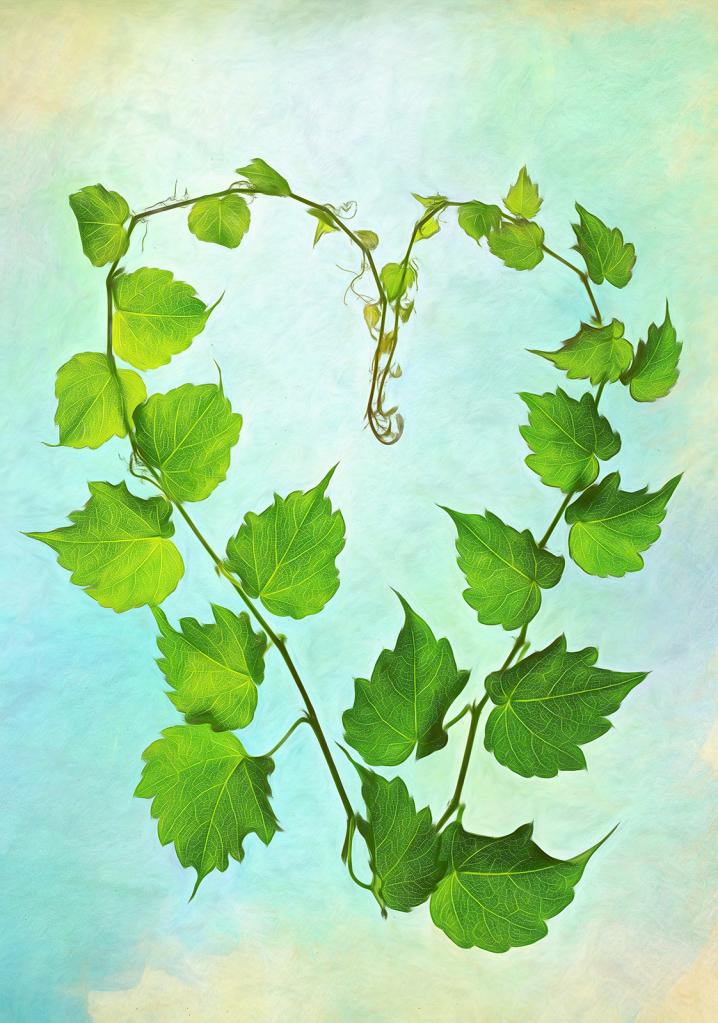 Heart of Vine