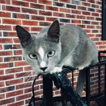 Diamond, the mama of grey kitties