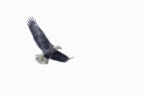 Eagle High Key  2876