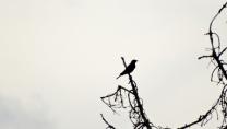 Bird IN my yard