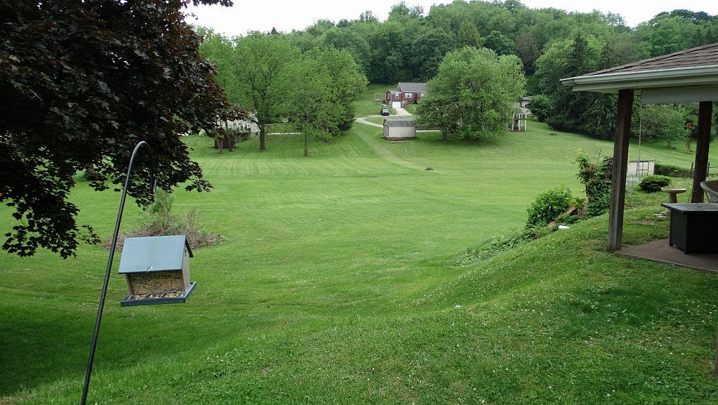 Picture OF my back yard