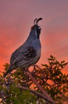 Sonoran Sunset Serenade
