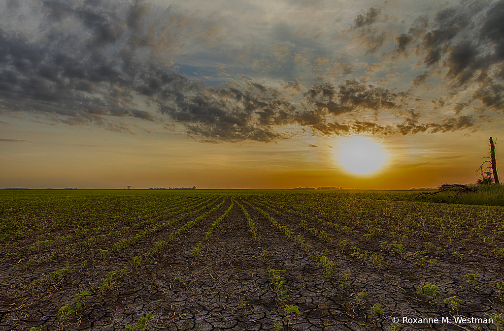 Beauty in the cracked earth of the soybean field - ID: 15826377 © Roxanne M. Westman
