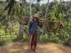 Harvesting Rice i...