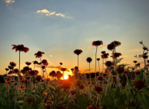 Sunset Indian blankets