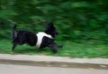 Panning with Major Motion Blur