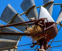 Windmill Wren?