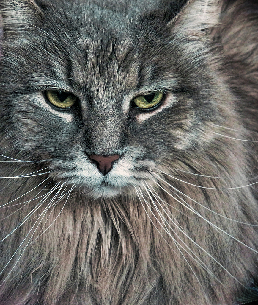 A Touch Of Grumpiness