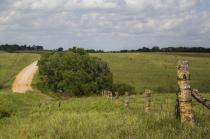 Kansas limestone fence