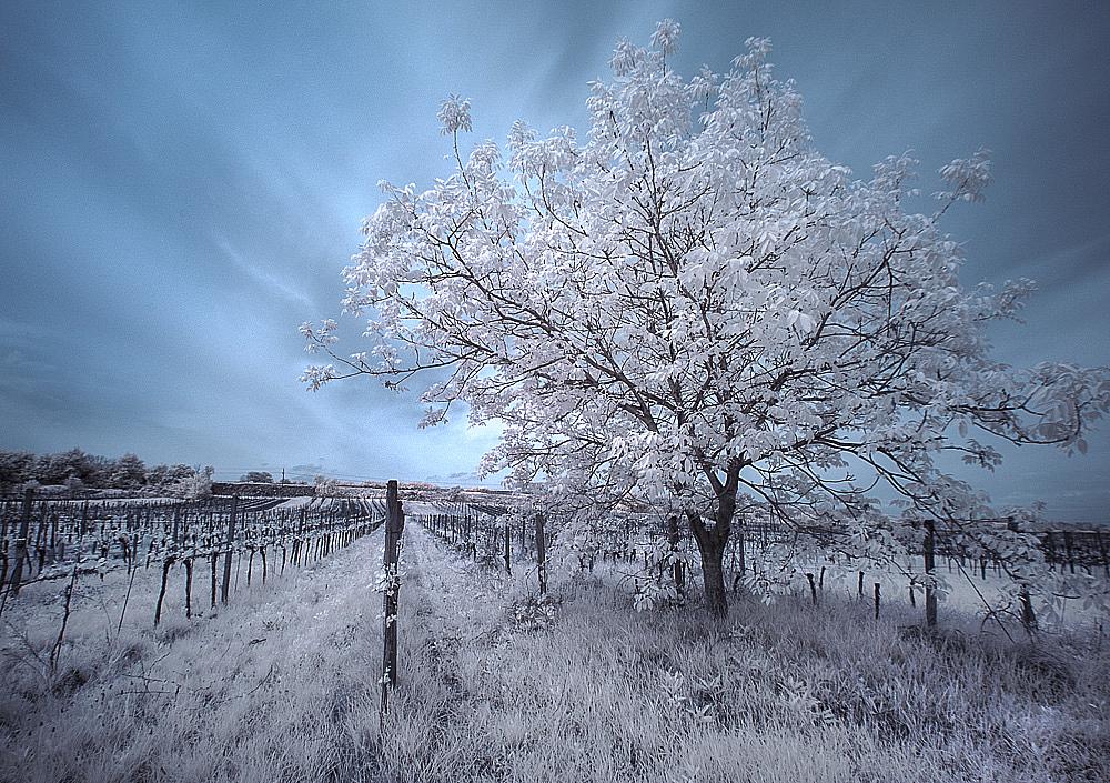 WinterScenery in Summer ( IR )