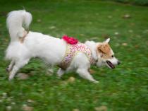 Beth Loves to Run