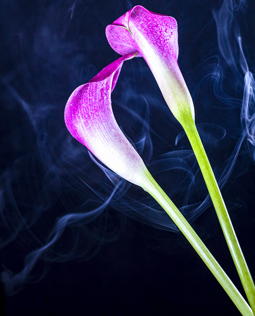 Lillies and Smoke