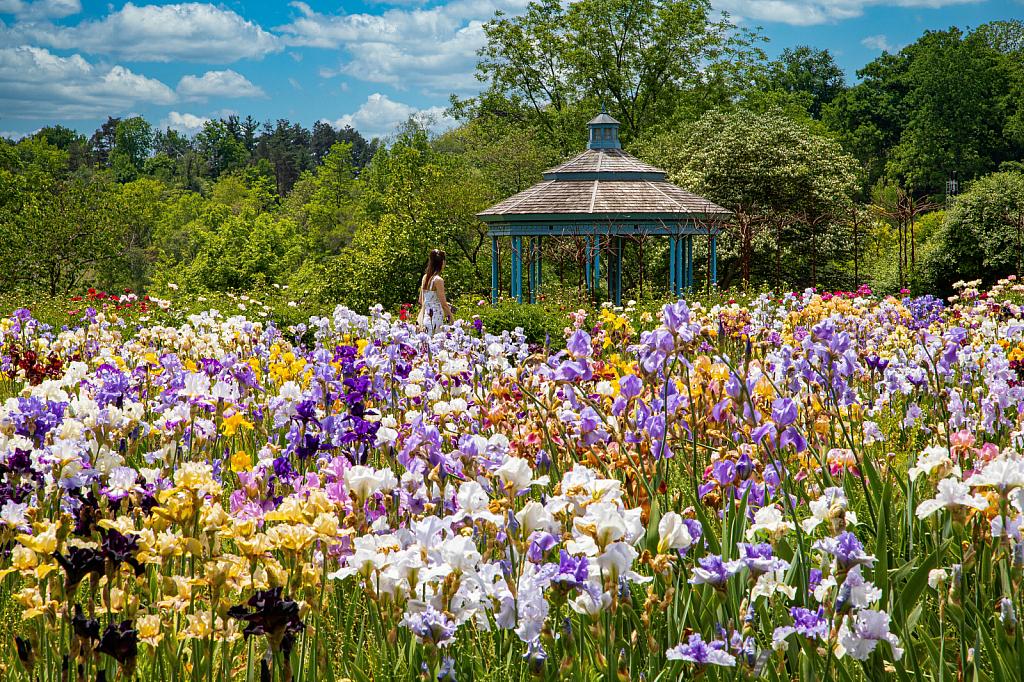 In the Laking Garden, RBG - ID: 15827035 © Marilyn Cornwell
