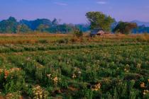Hut in Flowers field