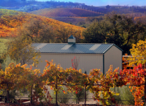 Autumn Vineyards Surrounding Barn