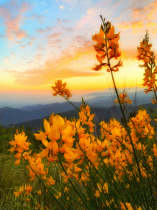 ~ ~ FLOWERS AT SUNSET ~ ~