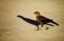 ~ ~ STROLLING WITH MY SHADOW ~ ~