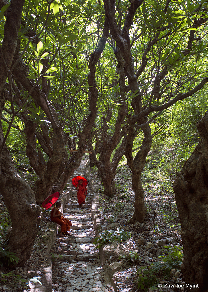 Monks in Forest