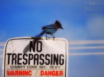 ~ ~ NO TRESPASSING ~ ~