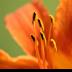 © Theresa Marie Jones PhotoID # 15828732: Close-up
