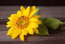 A Happy Little Flower