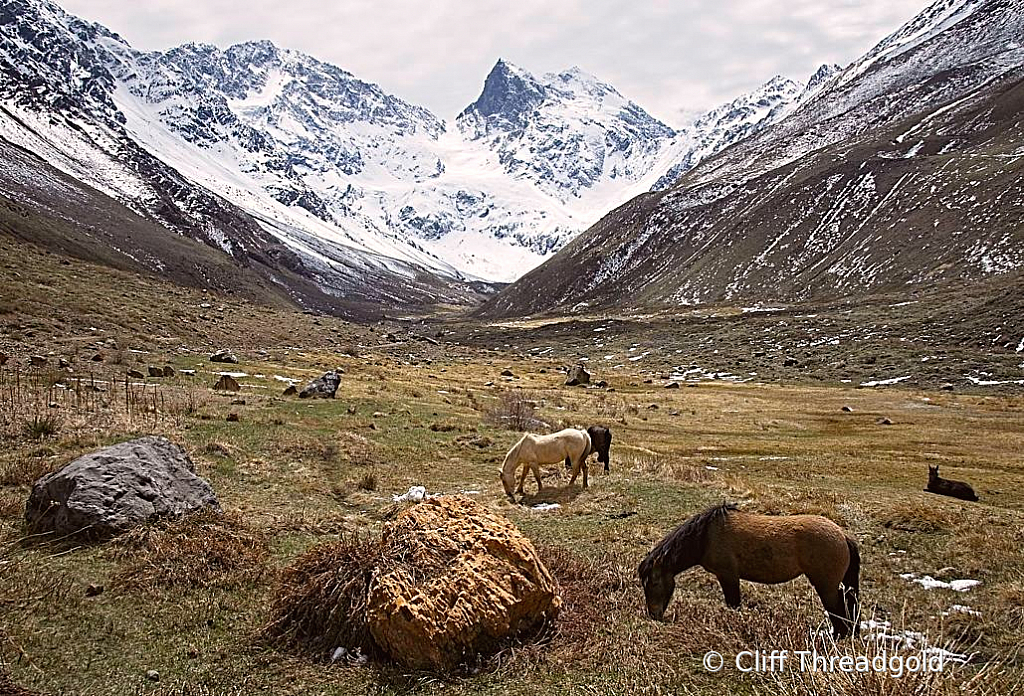 Grazing under the mountains