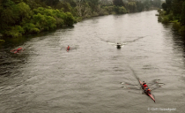 Rowing on the Waikato
