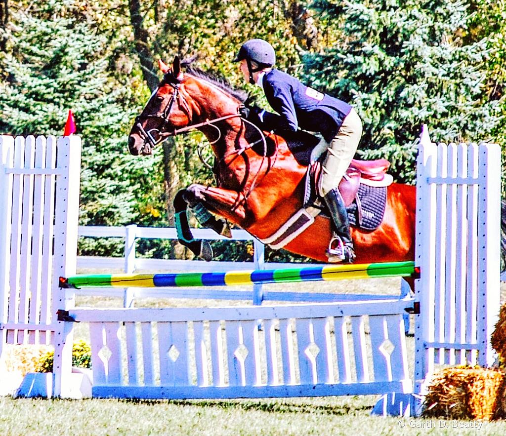 Jumping Horse  University of Findlay Demo